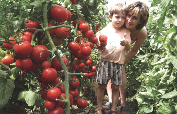 Семена для выращивания томатов 99