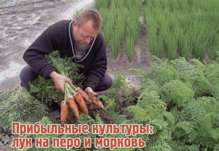 перо, выращивание моркови